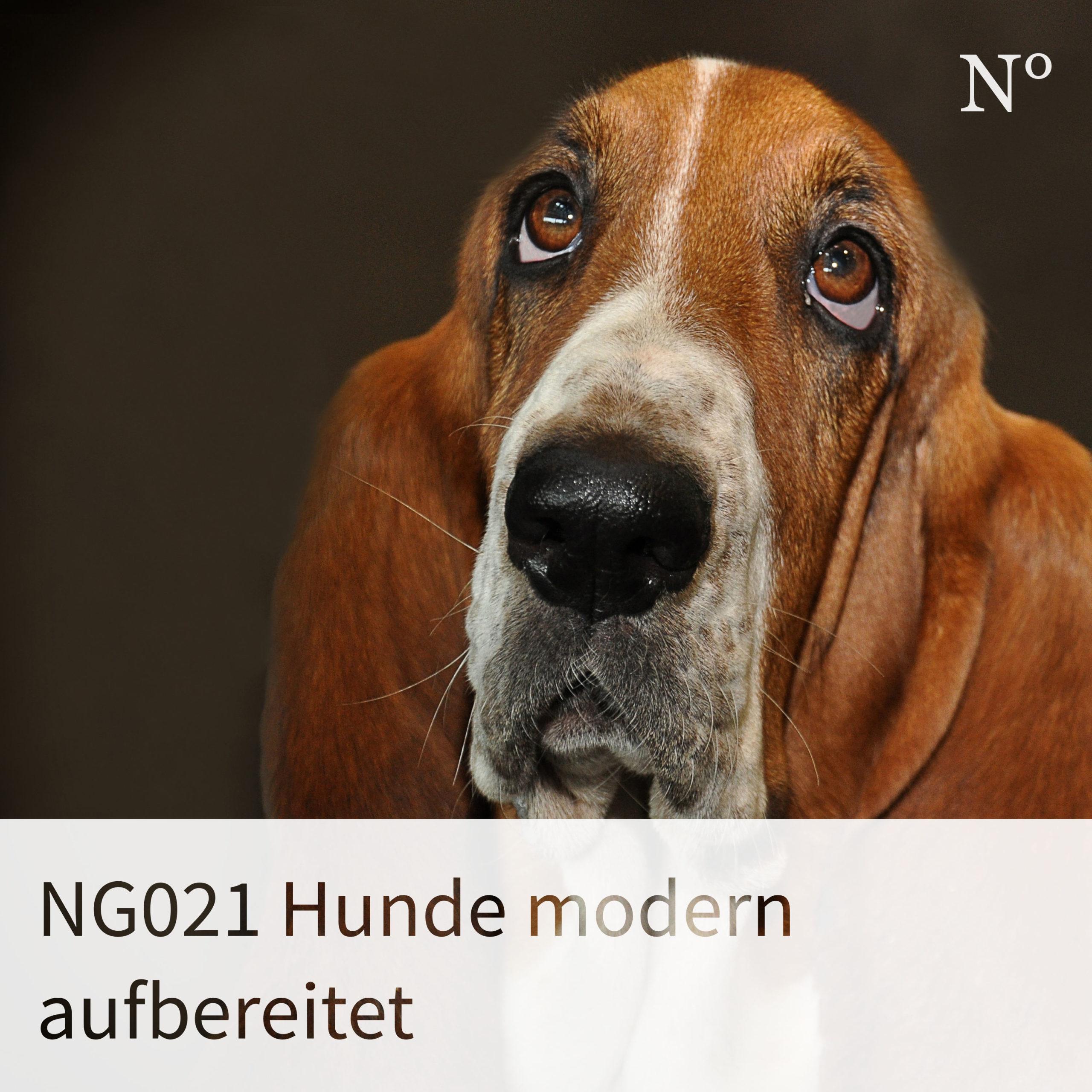 NG021 Hunde modern aufbereitet